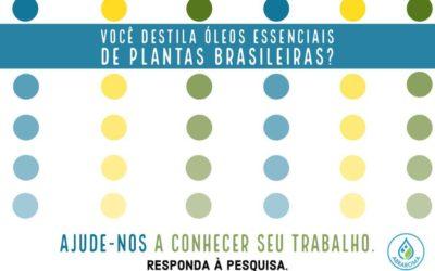 Produção de OEs de plantas brasileiras – pesquisa